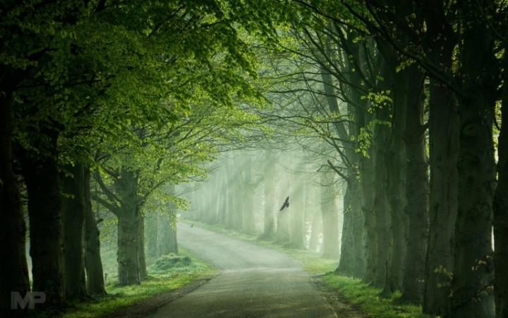 nature-path