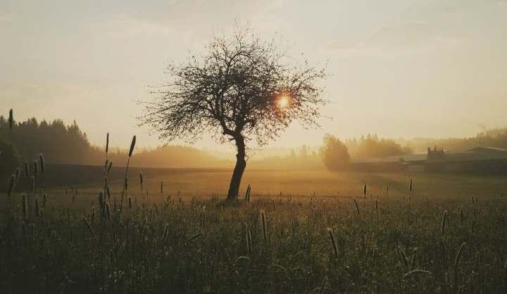 tree-morning-nature-sunrise