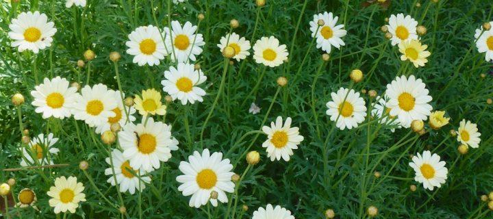 Flores001